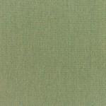 Canvas-Fern